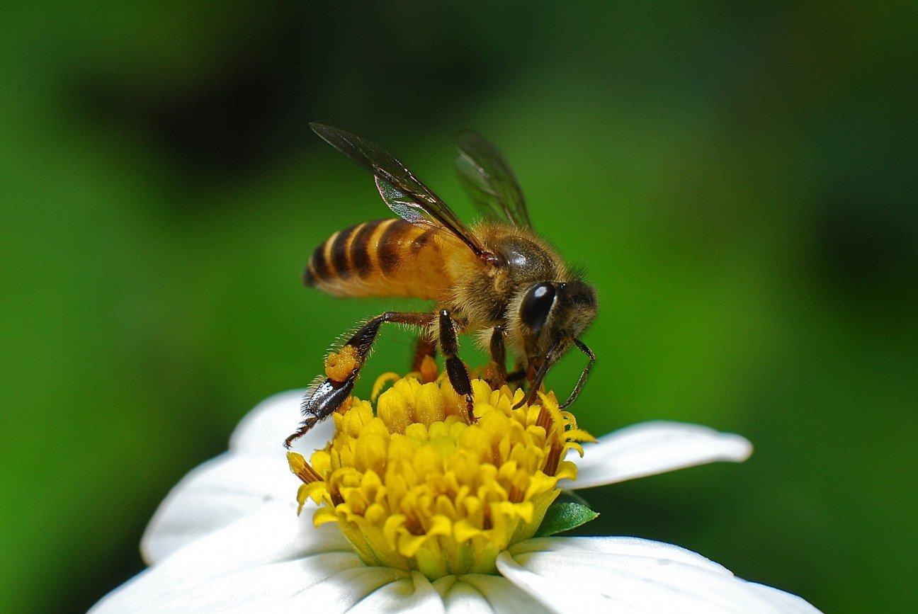 Пчелиный укус в любовном гнездышке 8 фотография